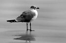 Seagull in Black and White - Port Aransas Texas by Debbie Pinard