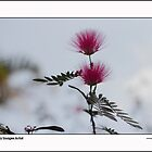 Smile Spring  by HamimCHOWDHURY