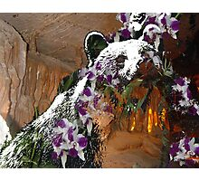 Bear Orchid Cave Photographic Print