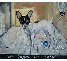 """""""dog from New York"""" Photographic Print"""