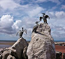 The Tern Project - Morecombe by Stephanie Owen