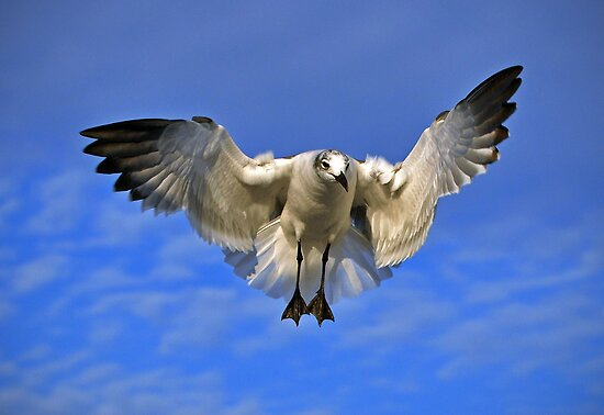 Seagull by venny