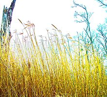 Tall Grass Love by Dr. Charles Taylor