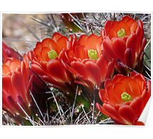 Spring Flowers in the Desert Poster