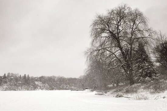Snowstorm on Grenadier Pond by Steve Silverman