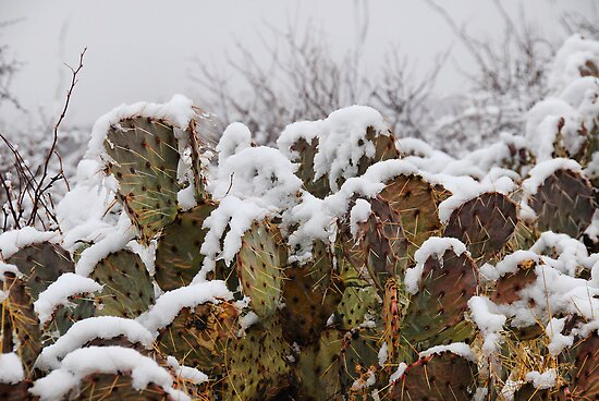 Desert Storm by Barbara Manis