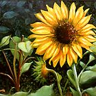 """""""Sunflower"""" by Andy Liberto"""