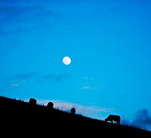 And the Cows Grazed Under the Moon by Howard Lorenz