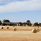 Golden Bales by Lozzar Landscape