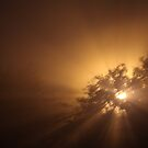 Sun on a Foggy Night? by Lisa Holmgreen
