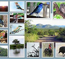 Africa's beauty by Elizabeth Kendall