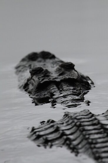 Prehistoric / Alligator Abstract by naturalnomad