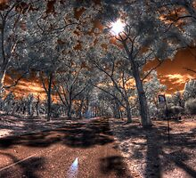 Lovekin Drive, Kings Park by BigAndRed