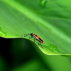 ~Bug on an Undulating Leaf~ by a~m .