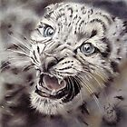 Snow Leopard by Paul Knight