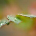 Quando fuori piove... by Andrea Rapisarda