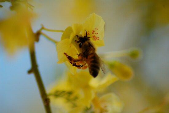 Pollen Gatherer by ScottishVet
