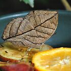 Indian Leaf Butterfly by Dorothy Thomson
