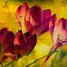 Textured Crocuses by Martina Fagan