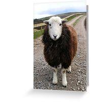 Middlesmoor Herdwick Greeting Card