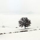 White Landscapes by Marco Vegni
