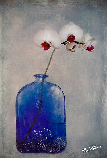 Orchids ii by Alana Ranney
