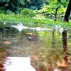 After the Rain by Rachel Meyer