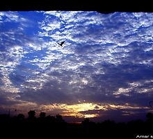 Flying in blue sky by amar singh