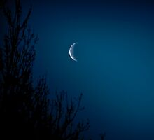 On a lonesome night when the blue moon shines by NicoleBPhotos
