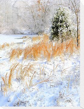 Peaceful Snow Scene by NatureGreeting Cards ©ccwri