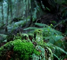 Mossy Log by Diana Rudy