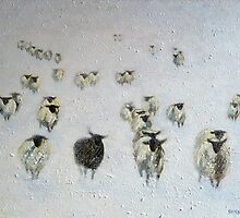 Odd One Out by Sue Nichol