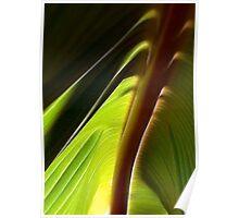 Banana Leaf Cabana Poster