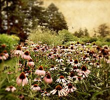 Echinacea Garden by Jessica Jenney