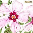 Phlox by Carol Kroll
