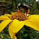 Bee on a Large Yellow Flower by Emily Clarke