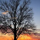 Sunset Tree by JGetsinger
