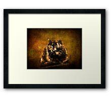 Shelley  Framed Print