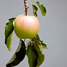 The Little Apple by Hege Nolan