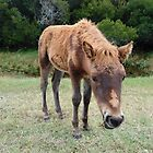 Wee Little Babe-Wild Colt-Assateague Island by Sandra Fazenbaker