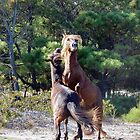 Bring It On! Wild Horse Fight, Assateague Island by Sandra Fazenbaker