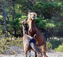 Bring It On! Wild Horse Fight, Assateague Island by Sandy O'Toole