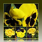 Colour of Sunshine Floral Collage with Roses and Pansies by BlueMoonRose