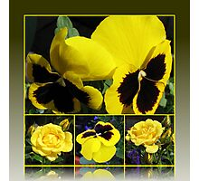 Colour of Sunshine Floral Collage with Roses and Pansies Photographic Print