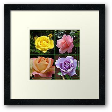 Roses Collage in Mirrored Frame by BlueMoonRose