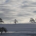 Trees in cold place by eddiebotha