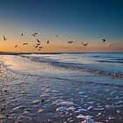 Seagulls at Dusk by Geoff Carpenter