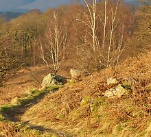 Borrowdale Path by Jacqueline Wilkinson