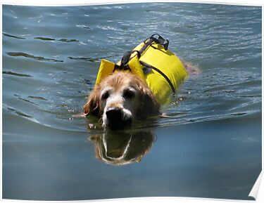 Winnie Swimming - O'Haver Lake, Colorado by Cari Graves