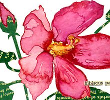 Hibiscus palustris (Swamp Rose Mallow) by Carol Kroll